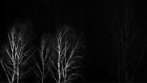 Fond d'écran sur fond noir : arbres